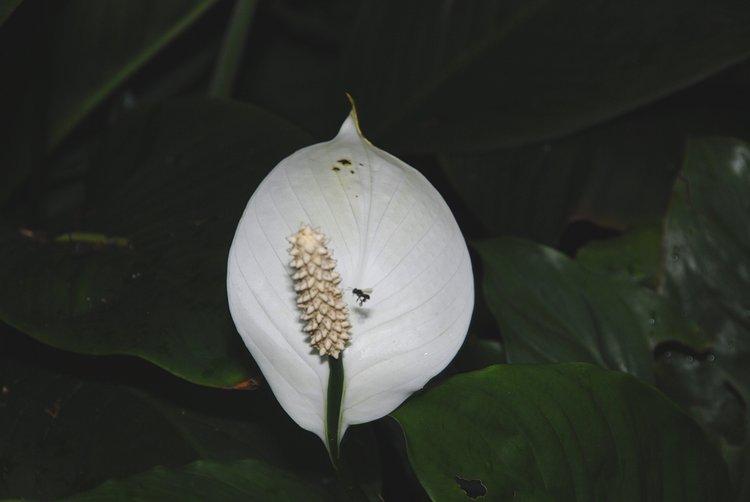 small/dec_03_0700_flower_bug.jpg