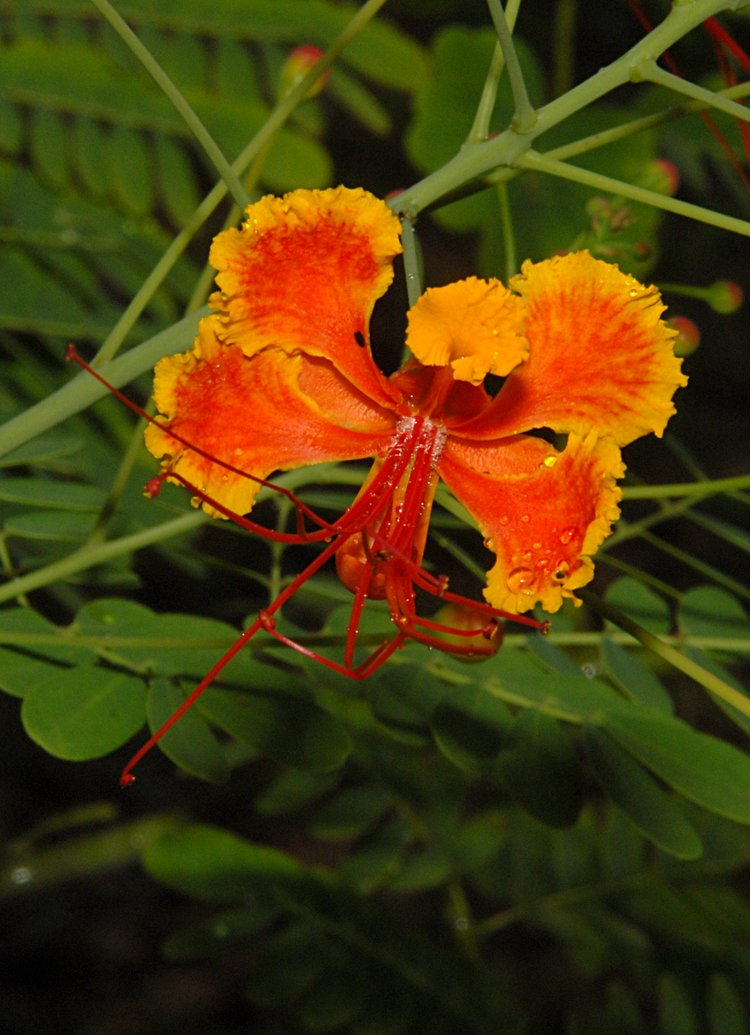 small/dec_03_0716_orange_flower.jpg