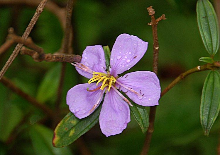 small/dec_03_0809_purple.jpg