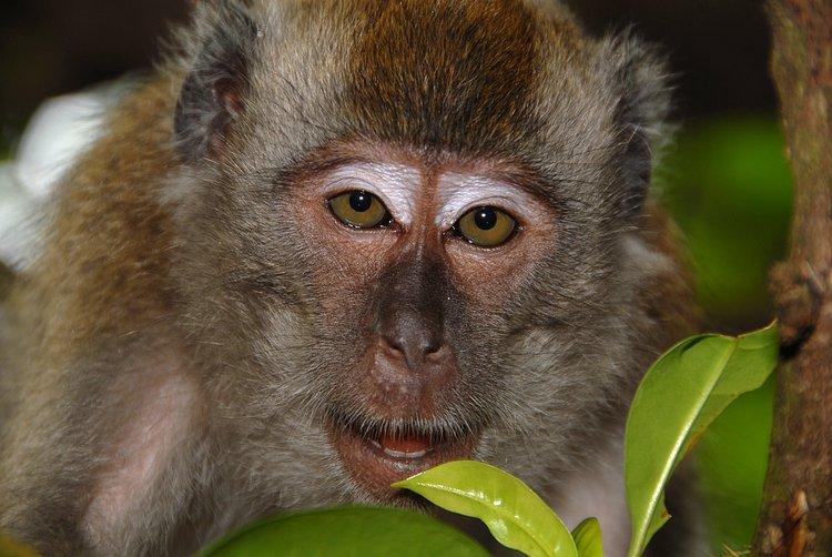 small/dec_03_0905_monkey_face.jpg
