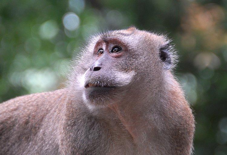 small/dec_03_0944_monkey_look.jpg