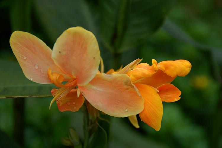 small/dec_03_0967_orange_flower.jpg