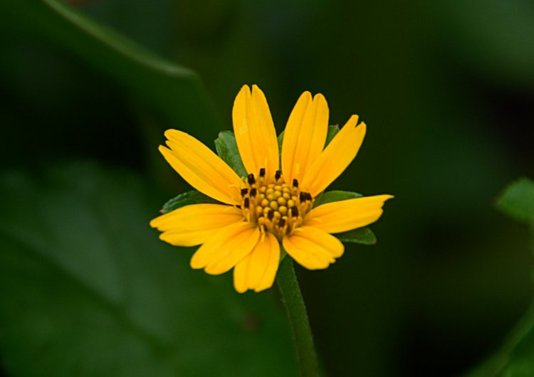 small/dec_03_0969_yellow_flower.jpg