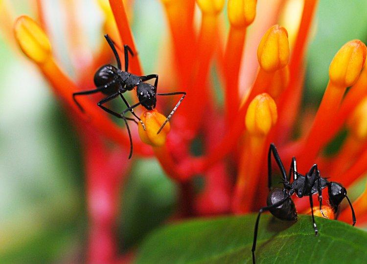 dec_09_1172_ants.jpg