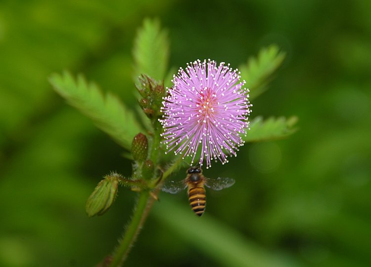 dec_27_1759_bee_flower.jpg