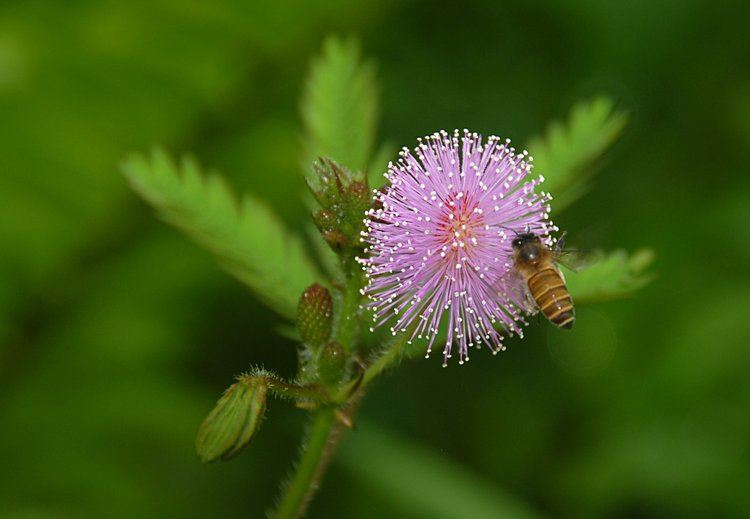 dec_27_1760_flower_bee.jpg