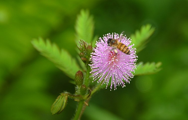 dec_27_1761_bee_flower.jpg