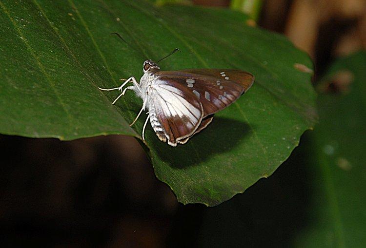 dec_27_2118_butterfly.jpg