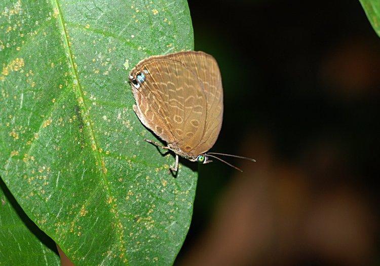 dec_29_2381_butterfly.jpg