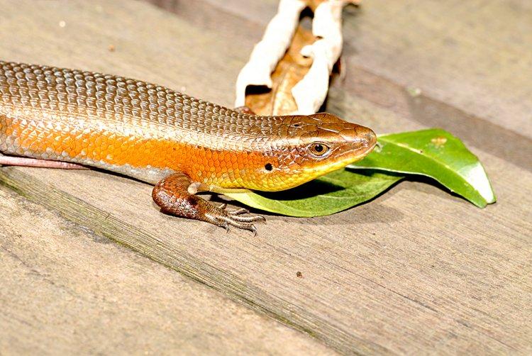 dec_29_2508_lizard.jpg