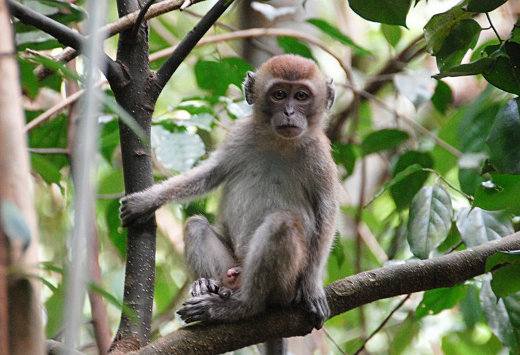dec_29_2723_monkey.jpg