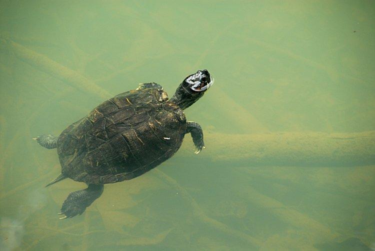 dec_29_2780_turtle.jpg