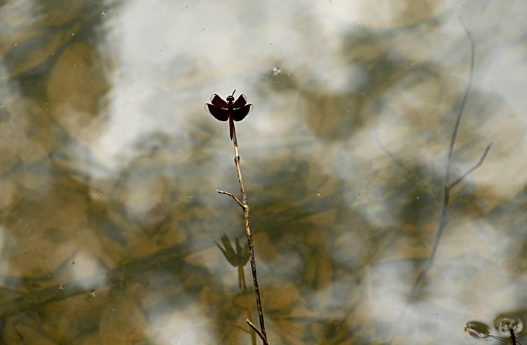 dec_29_2802_dragonfly.jpg