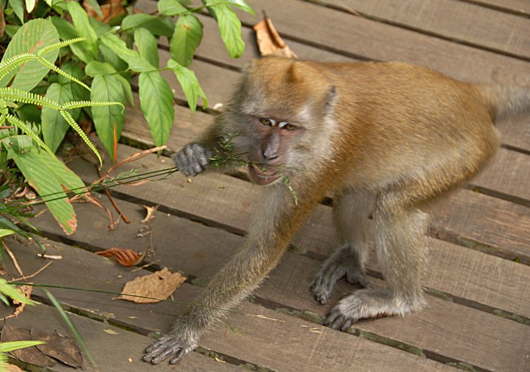 dec_29_2868_monkey_lunch.jpg