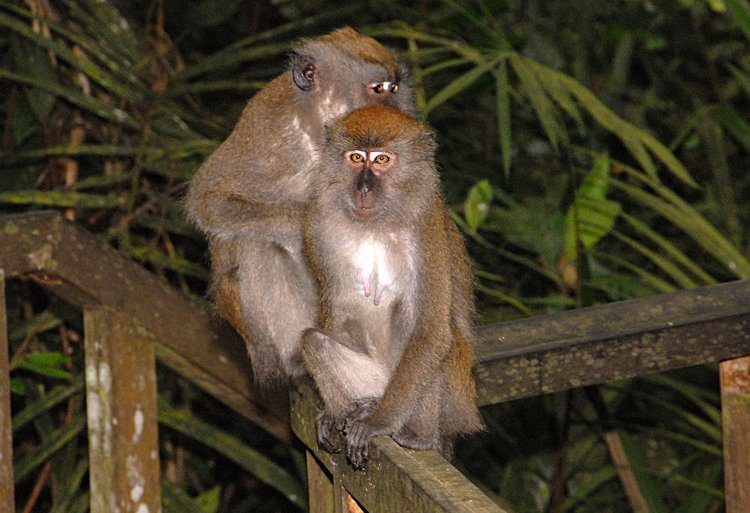 jan_01_3272_monkeys.jpg