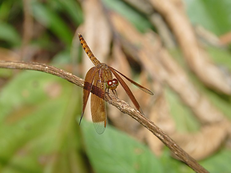 jan_01_3333_dragonfly_eyes.jpg