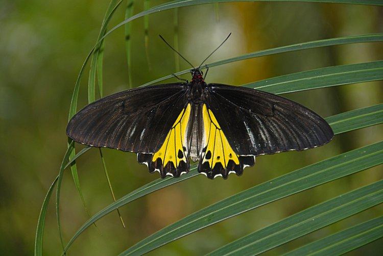 jan_02_3677_butterfly.jpg