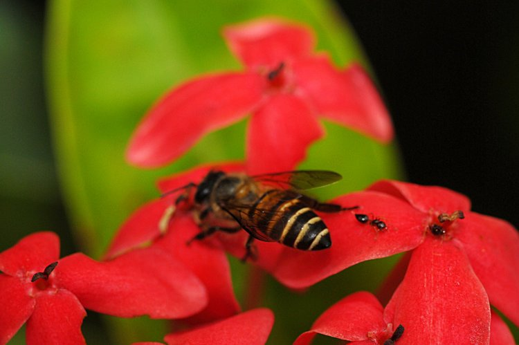 jan_13_3867_bee_ant.jpg