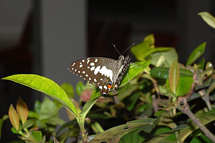 jan_13_4189_butterfly.jpg