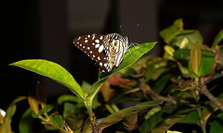 jan_13_4197_butterfly.jpg
