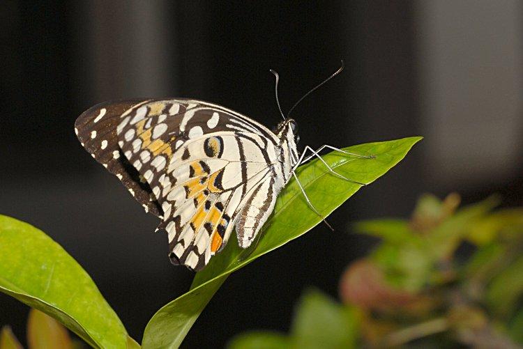 jan_13_4206_butterfly.jpg