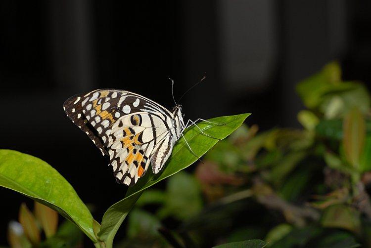 jan_13_4210_butterfly.jpg