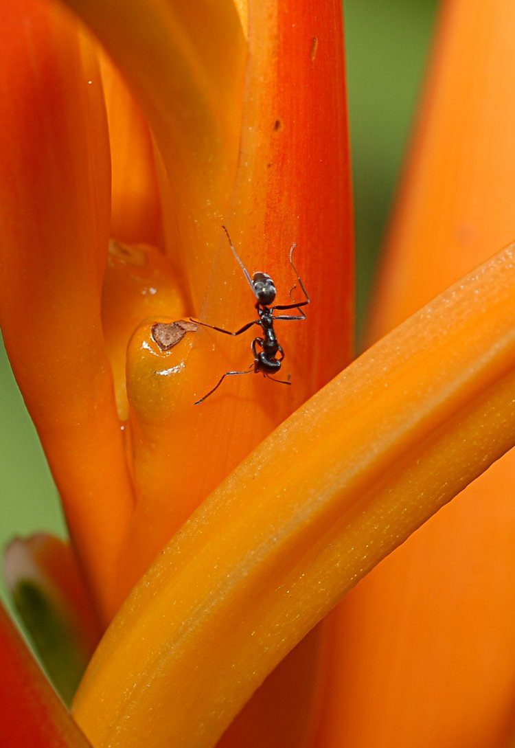 jan_13_4265_ant_orange.jpg