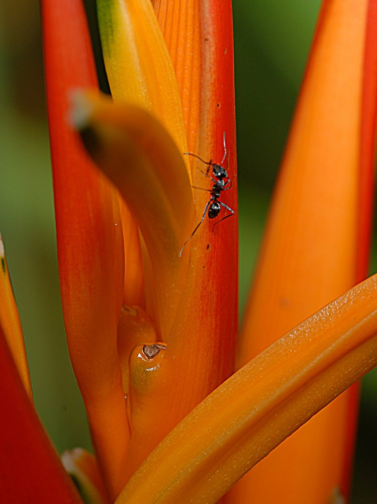 jan_13_4268_ant_orange.jpg