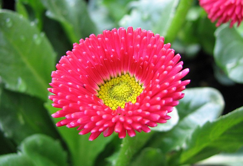 mar_10_0031_pink_flower.jpg