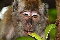 dec_03_0905_monkey_face.jpg