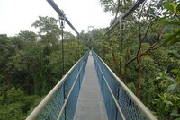 dec_27_1793_treetops_mainspan.jpg